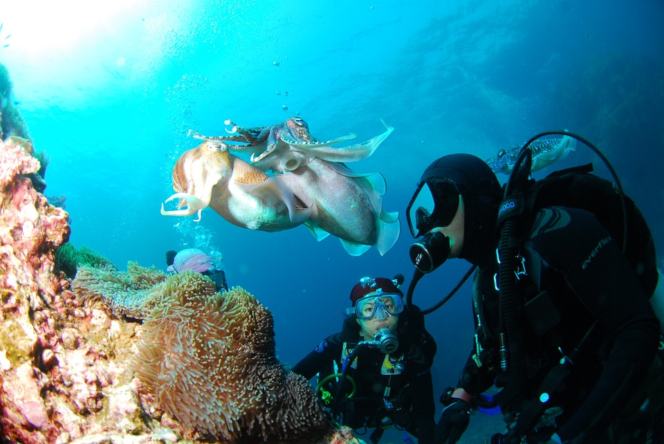 The Dos and Don'ts of Exploring Under Water