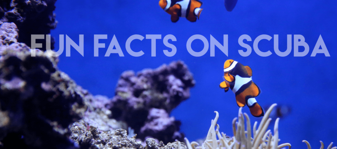10 Fun Facts Related to Scuba Diving