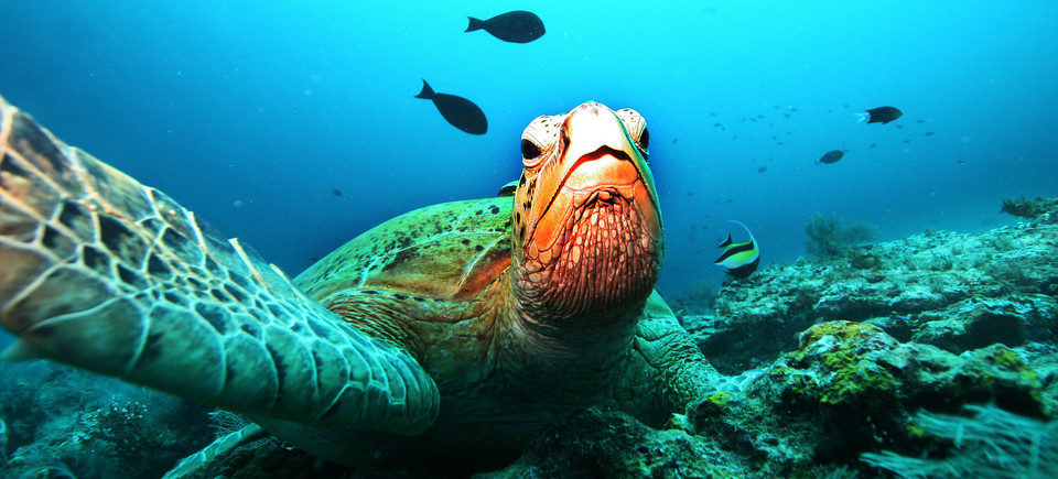 10 Incredible Marine Life Facts
