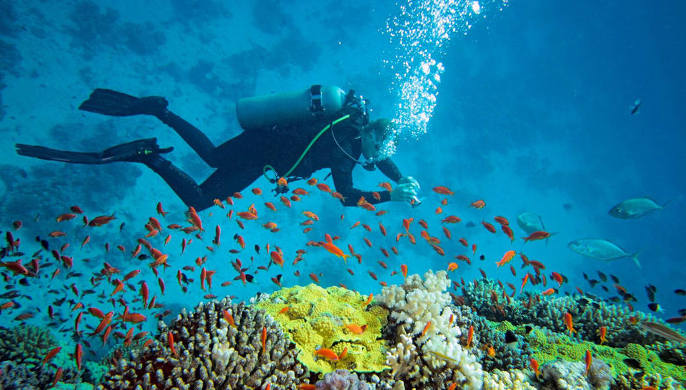 Difference Between Snorkeling, Skin Diving and Free Diving