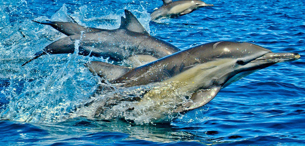 Dolphin Day Tours in Zanzibar