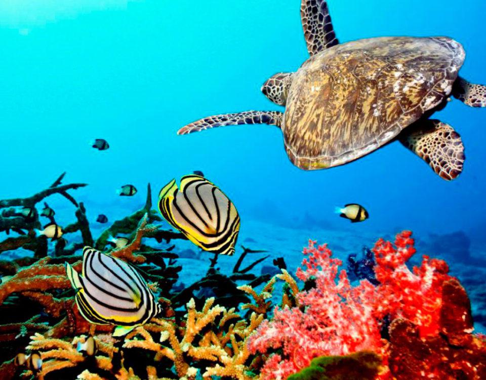 Zanzibar Diving Sites for Best Marine Species